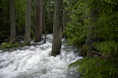 Overflow Mountain Stream Royalty Free Stock Photography