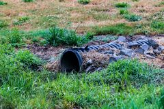 Overflow water drainage pipe emerging from the ground royalty free stock image