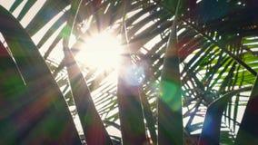 Overgaand Tropische Installaties met Zon die door trillen stock footage