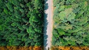 Overgang van de zomer naar de herfst De auto de gaan-gele bomendraai stock videobeelden