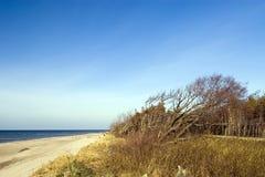 Overgehelde boom bij strand royalty-vrije stock foto