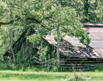 Overgrown античный амбар стоковые фотографии rf