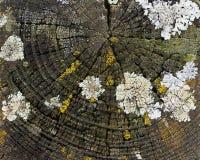 Overgrown деревянный штендер стоковые фото