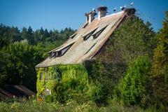 Overgrown дом с аистами на крыше Стоковое Изображение RF