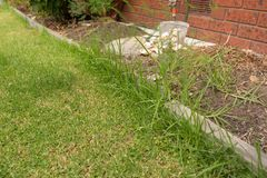 Overgrown край лужайки Стоковое Изображение