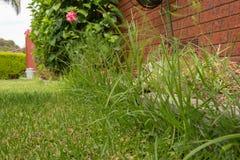 Overgrown край лужайки Стоковое Фото