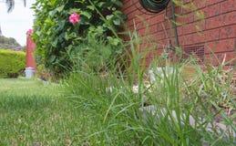 Overgrown край лужайки Стоковые Изображения