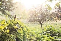 Overgrown лозы Стоковые Изображения