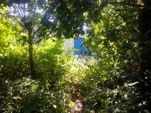 Overgrown путь с крапивами Стоковые Изображения RF