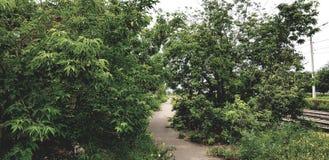 Overgrown растительность на пути стоковые фотографии rf