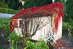 Overgrown сарай сада Стоковые Фотографии RF