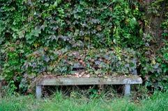 Overgrown скамейка в парке стоковые изображения