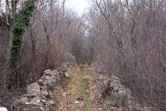 Overgrown след леса с плотными высушенными деревьями и ветвями Стоковые Изображения