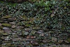 overgrown стена Стоковые Фотографии RF