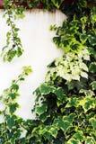 overgrown стена Стоковое фото RF