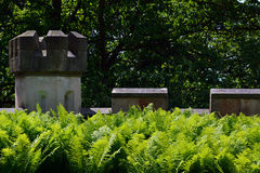 Overgrown стены замка Стоковое Фото