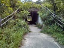 Overgrown тоннель с путем Стоковые Изображения RF