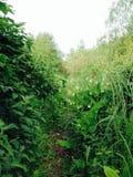 Overgrown тропа Стоковая Фотография RF