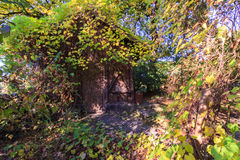 Overgrown хата Стоковое Фото