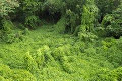 Overgrown2 Imagens de Stock Royalty Free