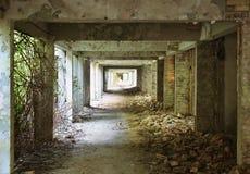 Overgrown abandoned hallway. Abandoned overgrown hallway of destroyed college Royalty Free Stock Image