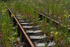 Overgrown abandoned railroad stock photo