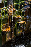 Overgrown ancient mossy fountain Royalty Free Stock Photo