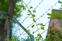 Overgrown barbed wire fence with blurry building in background stock image