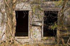 Overgrown barn. An old barn overgrown by trees and vines on an abandoned farm Stock Photos