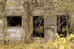 Overgrown Barn Front. The front of a barn overgrown with vines and trees on an abandoned farm.  Windows and a door shown, photographed in autumn Stock Image