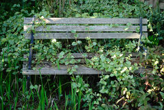Overgrown Bench. A handmade bench that has been consumed by overgrowth royalty free stock photos