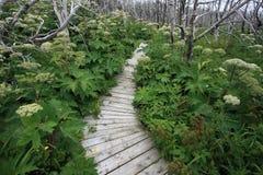 Overgrown Boardwalk Stock Images