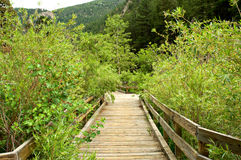 Overgrown Boardwalk Stock Image