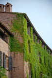 Overgrown brick residential building Royalty Free Stock Images