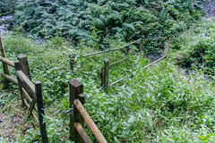 Overgrown Broken Footbridge royalty free stock photos