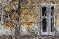 Overgrown building fassade. Severely overgrown old building fassade Royalty Free Stock Photos