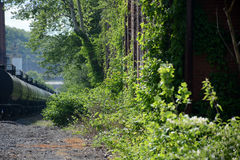 Overgrown building with tanker cars Royalty Free Stock Photography
