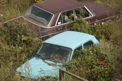 Overgrown cars royalty free stock photos