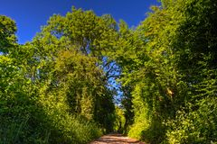 Overgrown country lane. Lane with trees forming tunnel in English countryside stock photos