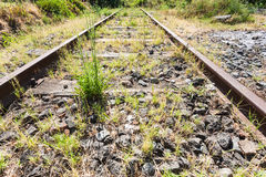 Overgrown country railroad in Sicily Royalty Free Stock Image