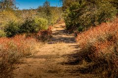 Overgrown country road bordered by native plant buckwheat, coast. Al live oaks and black oaks in southern California mountains royalty free stock photos