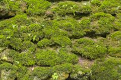 Overgrown dry stone wall Stock Images