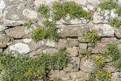 Overgrown dry stone wall. Sunny illuminated overgrown dry stone wall Royalty Free Stock Photos