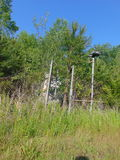 Overgrown Fence. An old, abandoned fence & gate overgrown by grass and trees royalty free stock photos