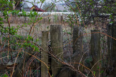 Overgrown fence Royalty Free Stock Images