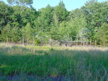 Overgrown Fence. A rusty fence and gate overgrown with trees and grass stock photos