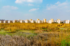 Overgrown fields with apartment buildings Royalty Free Stock Photography