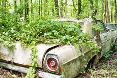 Overgrown Ford Royalty Free Stock Photos