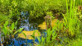 A small pond in country garden. Overgrown with garden flowers and shrubs small pond Royalty Free Stock Image