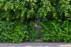Overgrown garden gate Stock Image